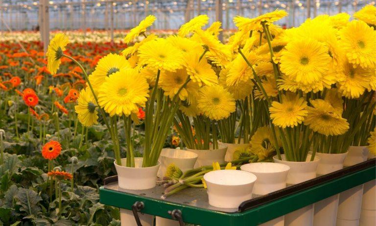 Çiçeklerinizi Dünyanın Her Yerine Ulaştırıyoruz